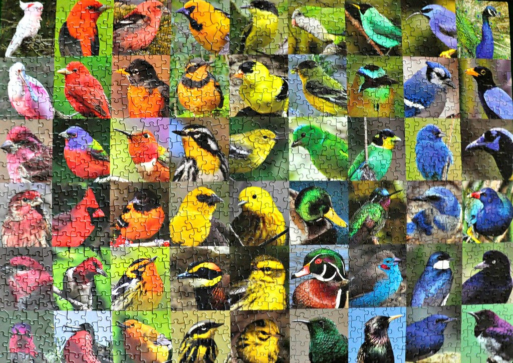 Rainbow of birds puzzle. by sailingmusic