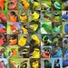 Rainbow of birds puzzle.
