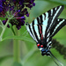 The Other Side of a Zebra Swallowtail