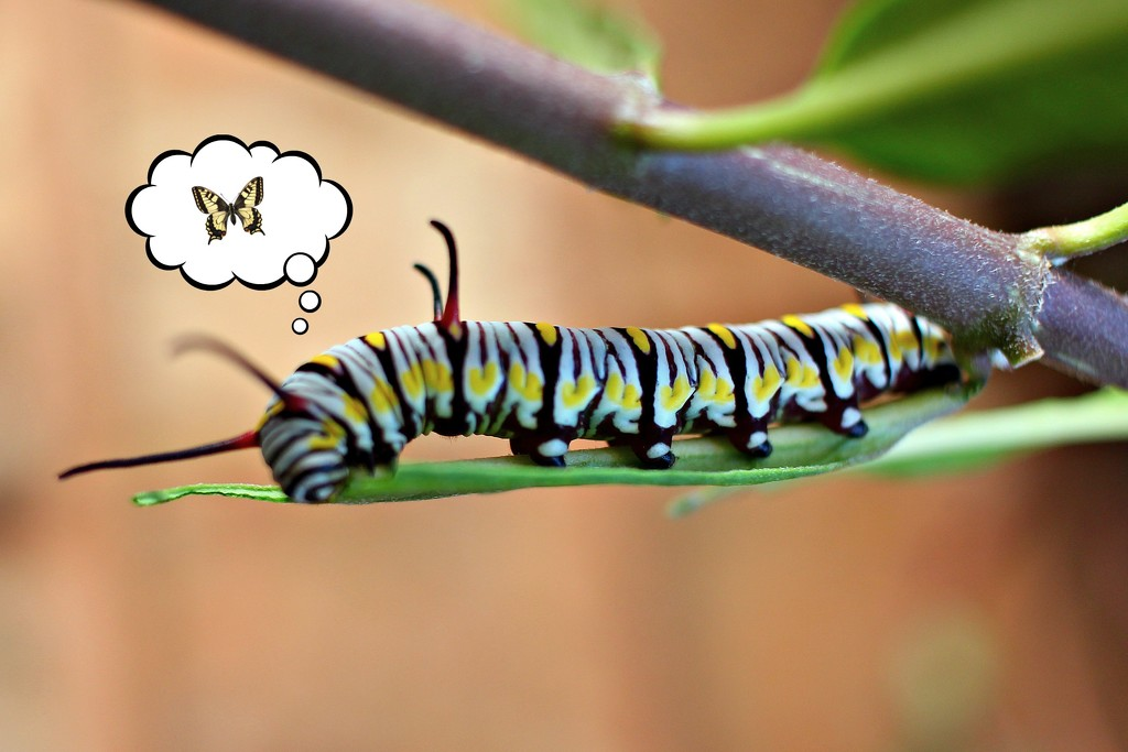 Future Butterfly by judyc57