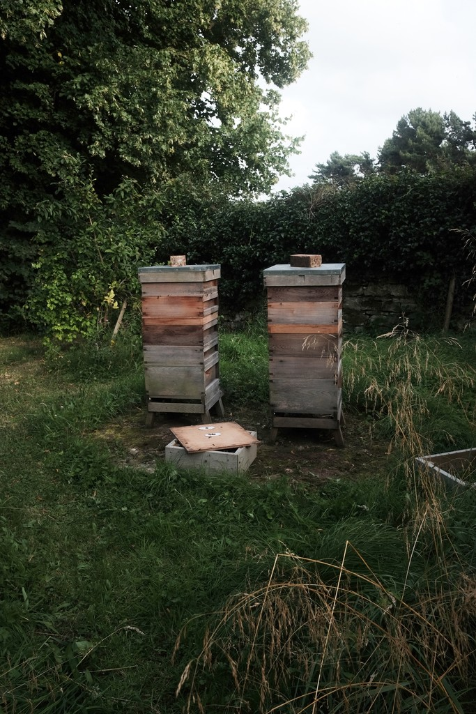 Beehives by allsop