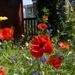 Wildflower Garden by cmp
