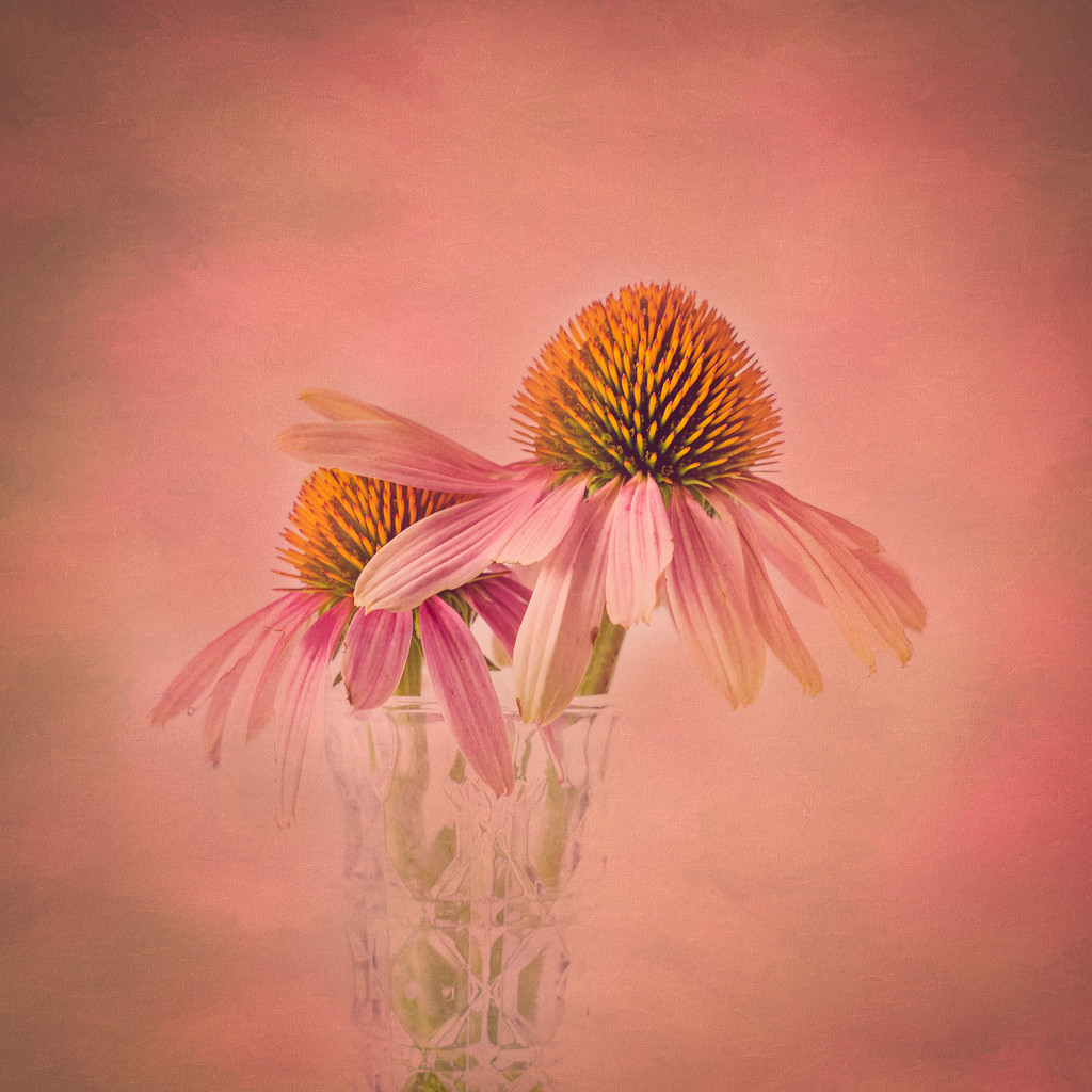 cone flowers by jernst1779