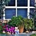 A Pretty Front Garden ~