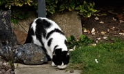 11th Aug 2020 - The very shy Kitty .