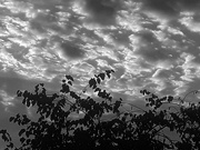 10th Aug 2020 - Cloudiness