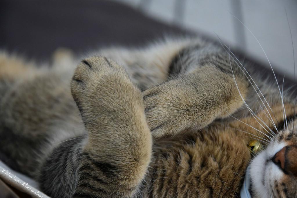 paws by parisouailleurs