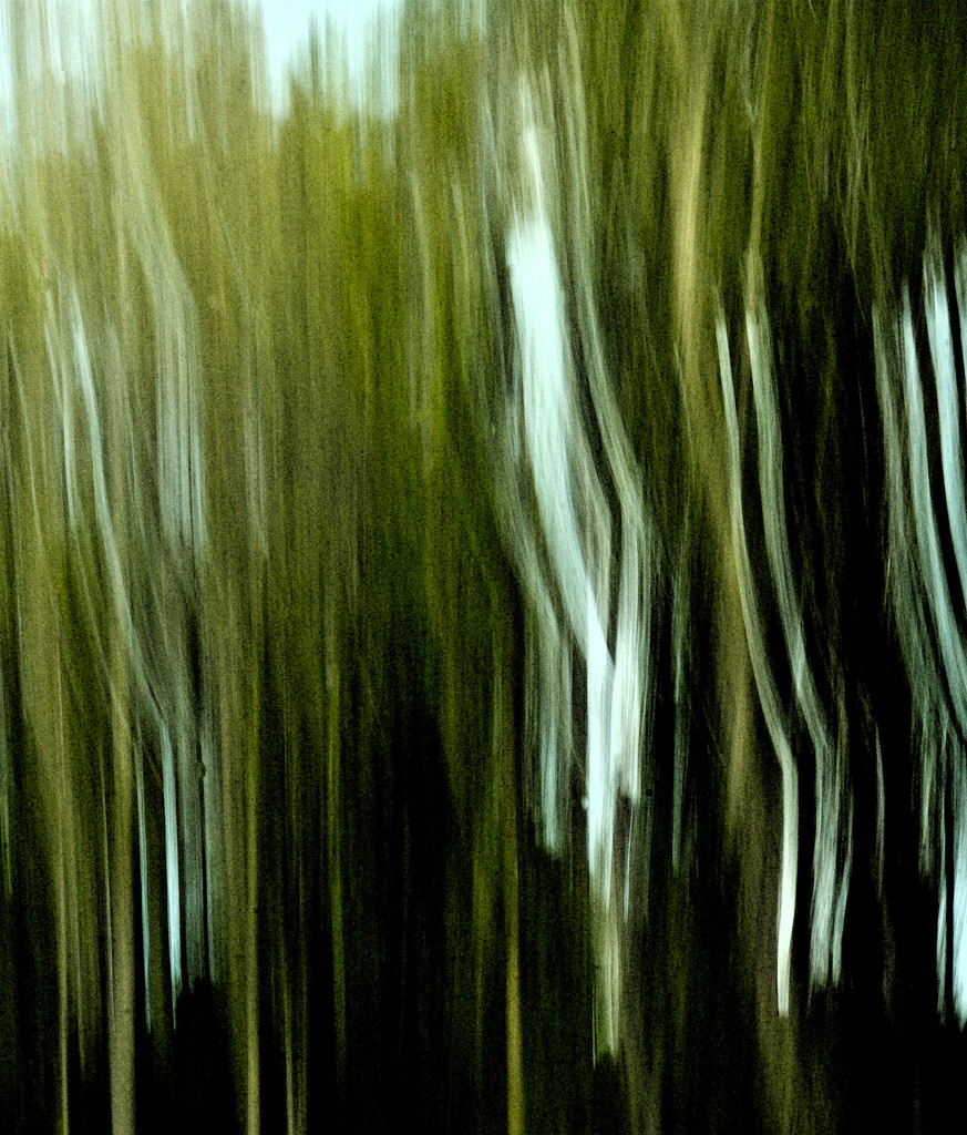 Tree abstract 1 by annied