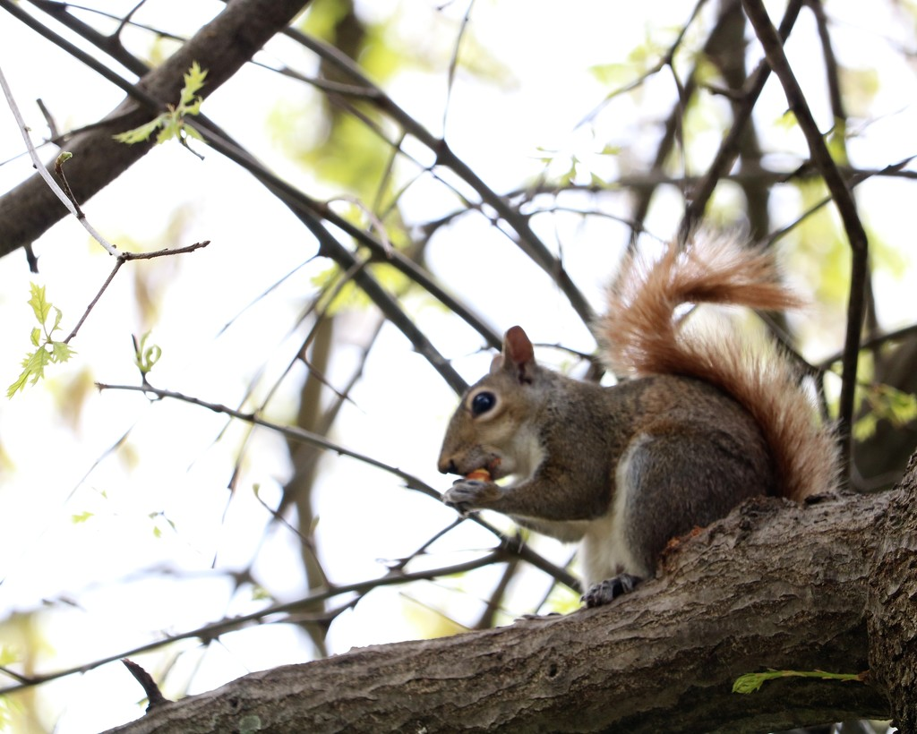 April 24: Squirrel by daisymiller