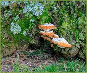 10th Aug 2020 - Tree Fungi