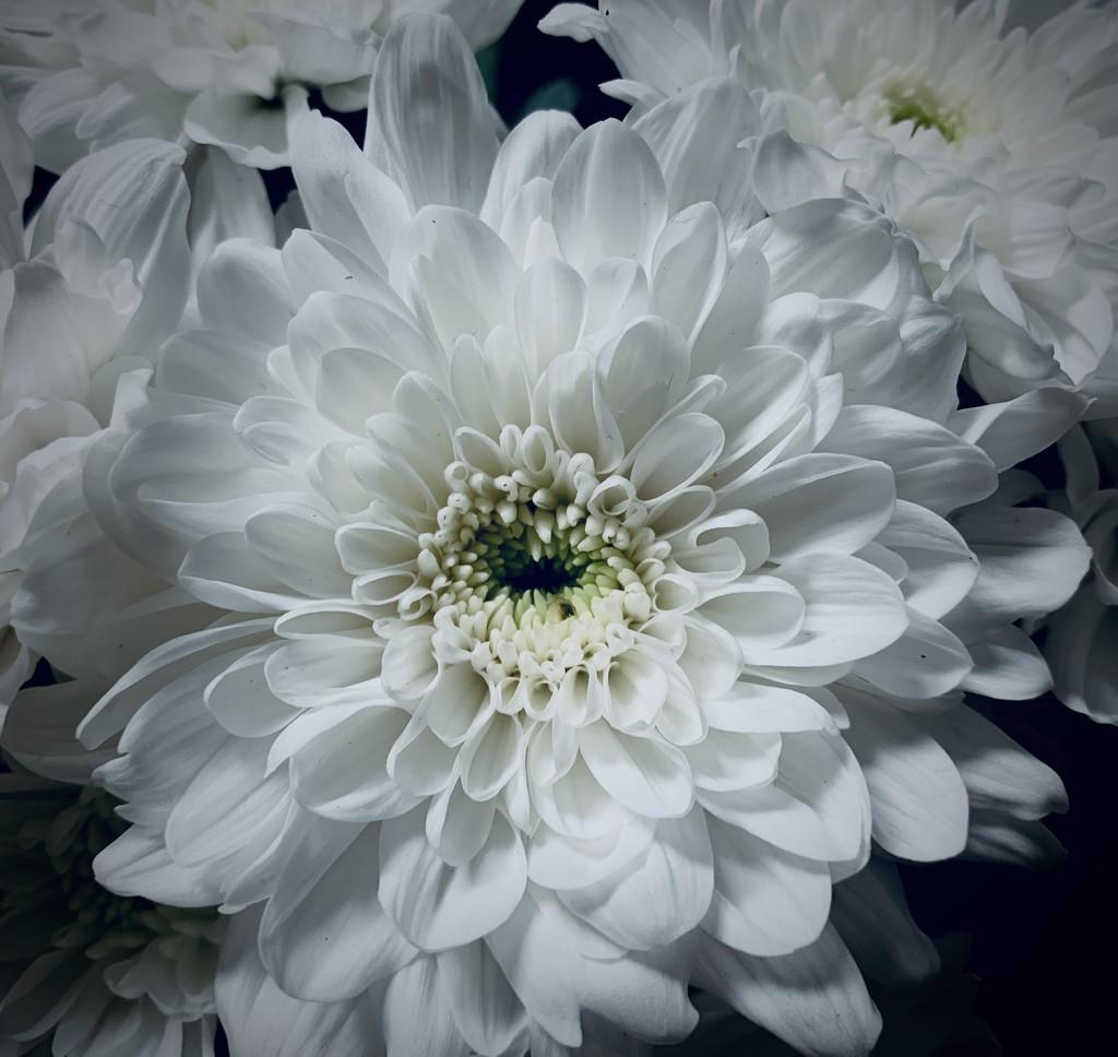 Flower by tracybeautychick
