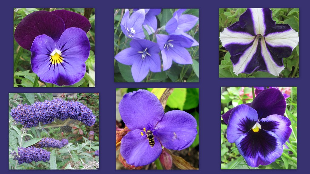 Shades of purple flowers by grace55