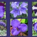 Shades of purple flowers