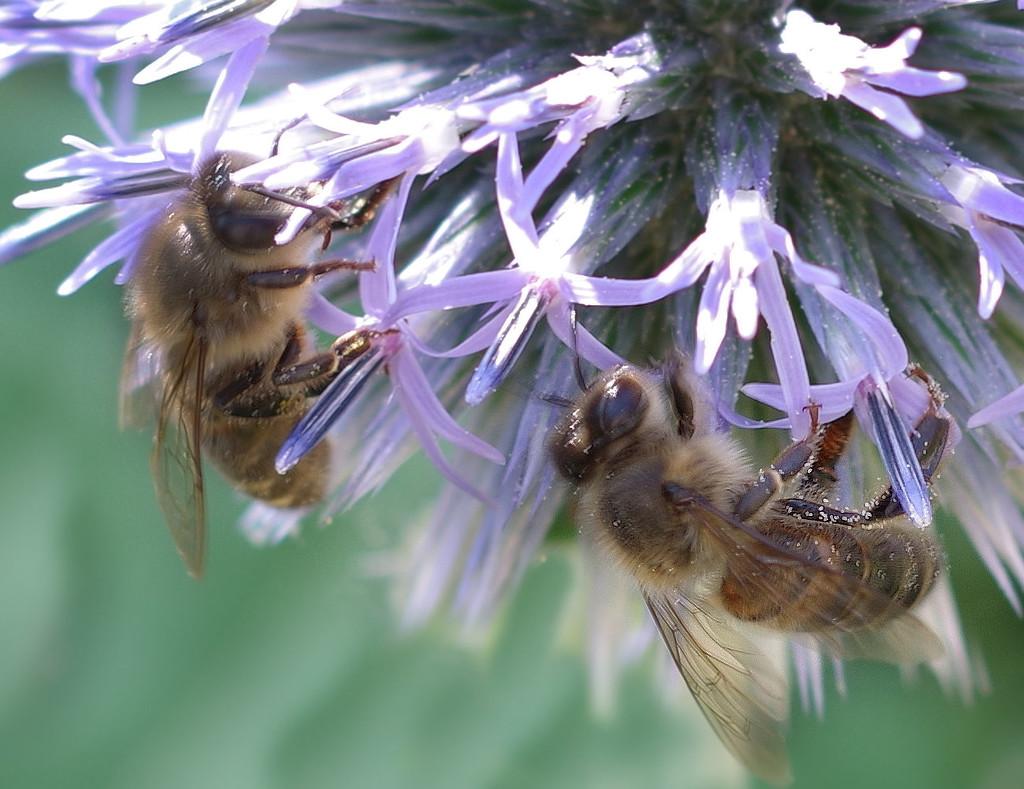 Honey Bees by thedarkroom
