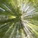 Zoom Burst Trees I by timerskine