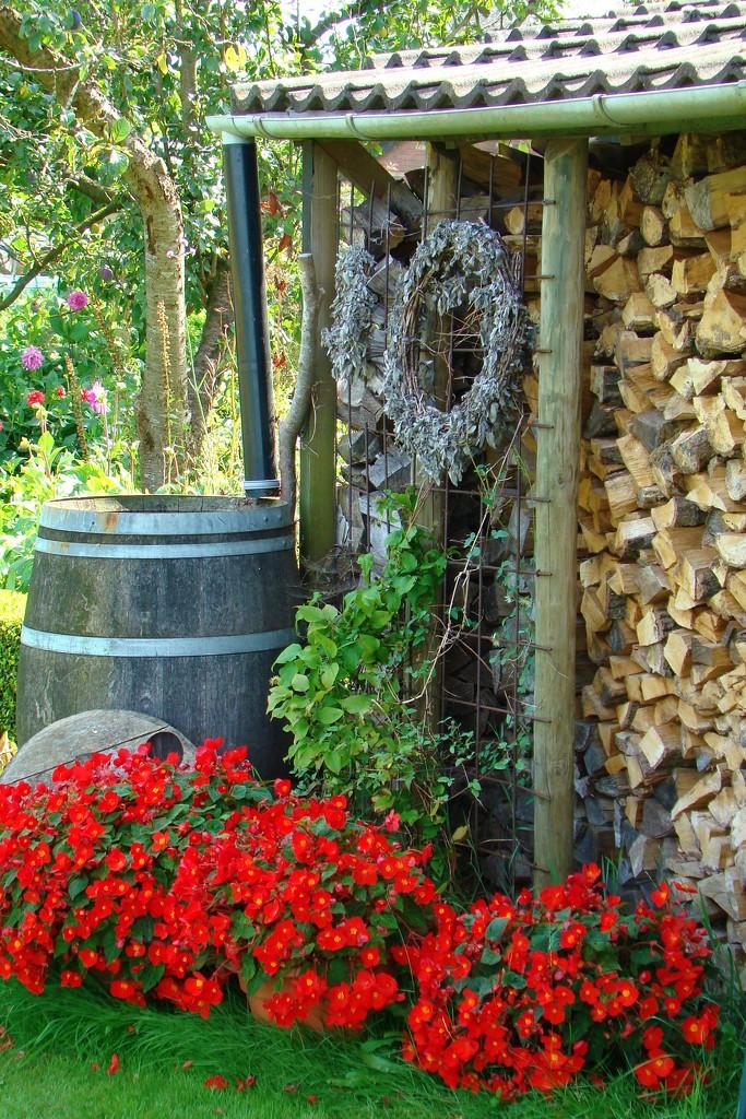 red flowers by gijsje
