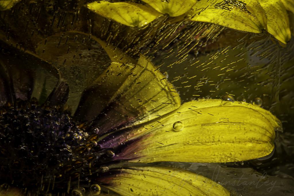 Flower in Ice  by kipper1951