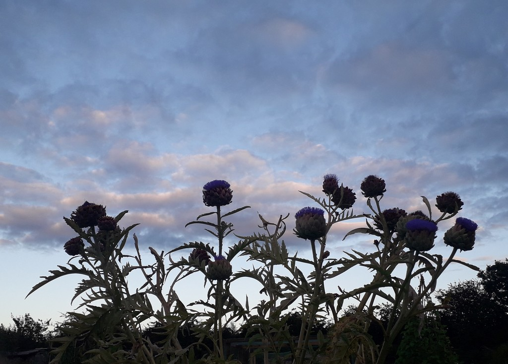 Artichokes in the evening  by jokristina