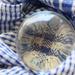 L - Lens ball