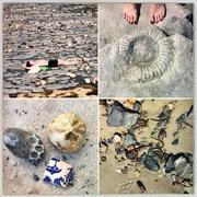 12th Aug 2020 - Fossil beach