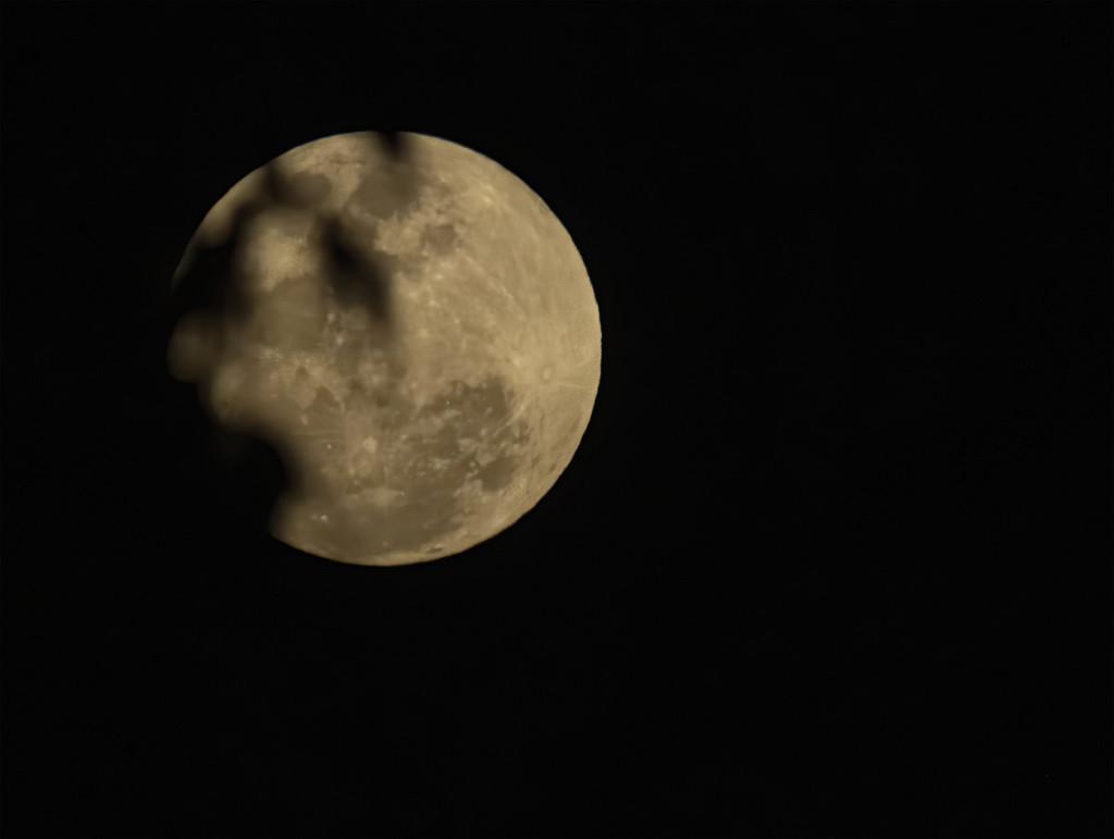 last weeks moon again by koalagardens