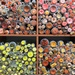 Buttons at the fabric store