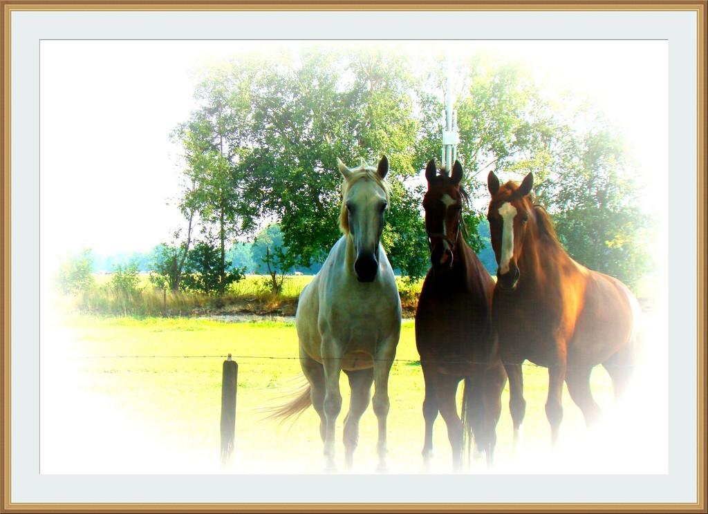 three horses by gijsje
