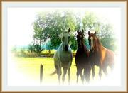 13th Aug 2020 - three horses