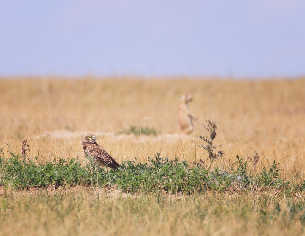 prairie ecosystem by aecasey