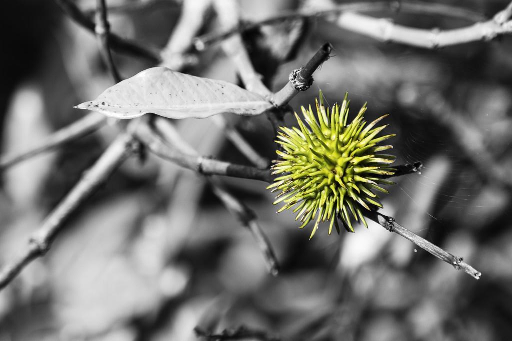 Seed by sugarmuser