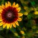 Happy Flower by joansmor