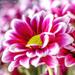 closeup by jernst1779