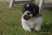 11th Aug 2020 - Romeo & the pine cone
