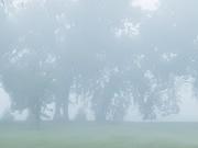 13th Aug 2020 - The Fog