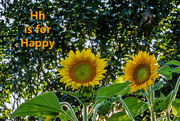 8th Aug 2020 - August Alphabet Words - Happy