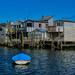 Riverside homes Hikoikoi Petone NZ