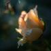 Dreamy  by haskar