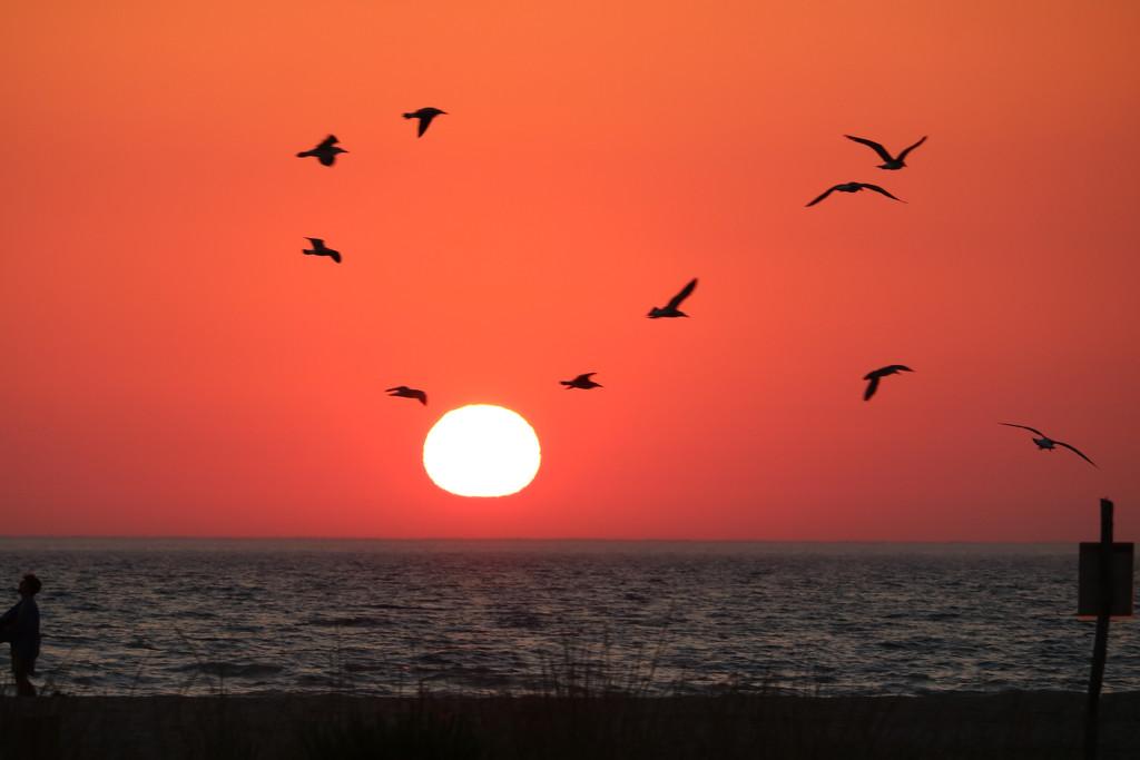 Bird set free by frappa77