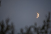 13th Aug 2020 - Morning Moon