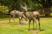 11th Aug 2020 - Deer park, Kimcote