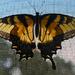 Swallowtail filter