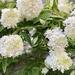 Full Bloom by melfru5