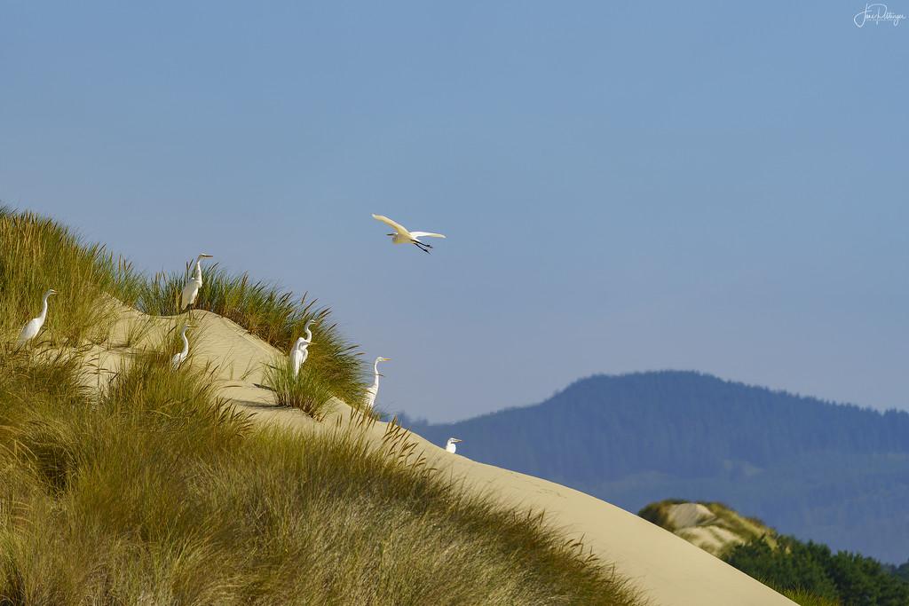 Egret Lookouts by jgpittenger