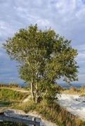 13th Aug 2020 - Tree on the ridge