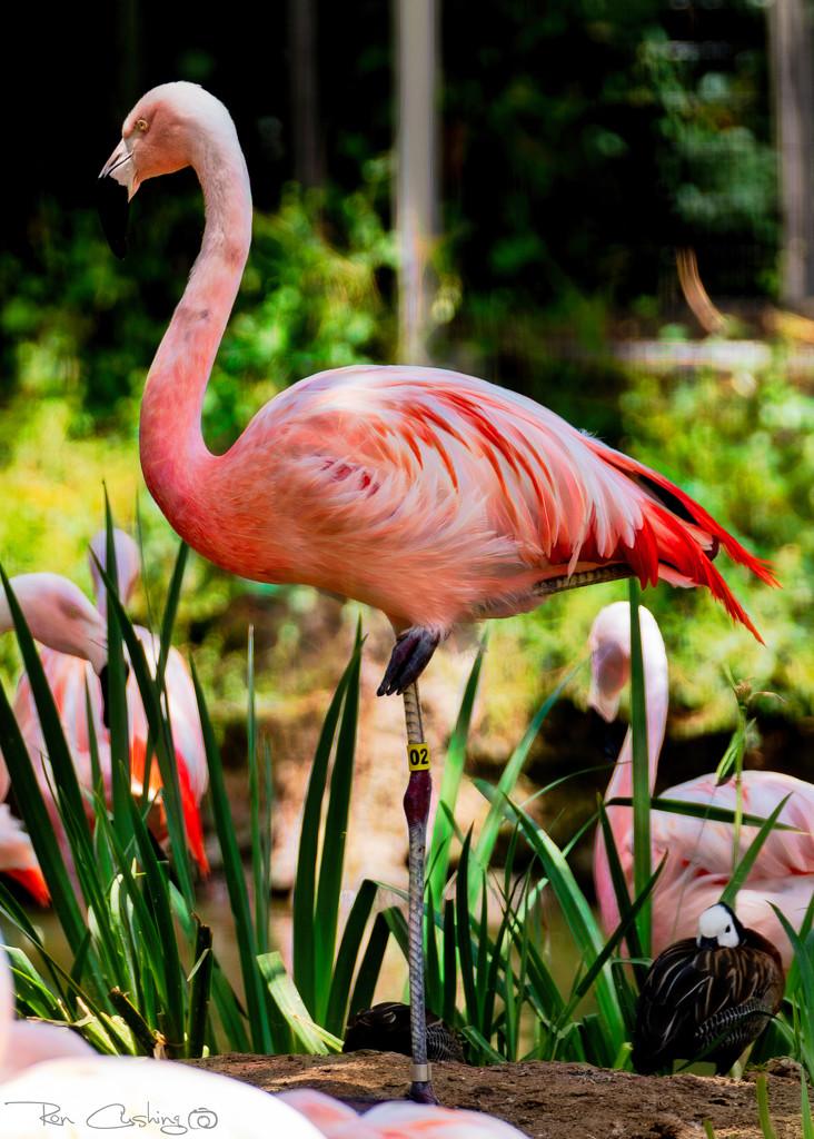 Flamingo Friday '20 22 by stray_shooter