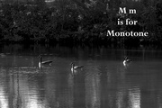 13th Aug 2020 - August Alphabet Words - Monotone