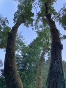 14th Aug 2020 - Think like a tree