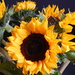 Birthday Sunflowers by 365anne