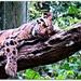 Tree Cuddler
