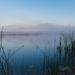 Tiny Marsh on a Misty Morning by mgmurray